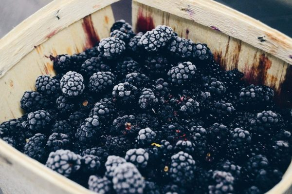 Traugers Farm Blackberries
